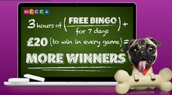 free bingo every day at mecca for newbies